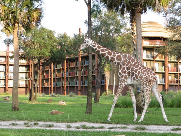 Disney's Animal Kingdom Lodge Photo Credit: Julie K.