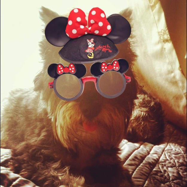 Our dog Margaret getting silly with the Disney Memories App.